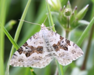 Silver-ground carpet